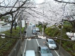 Sakurazaka